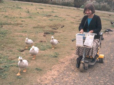 Jill Holroyd at Peakirk Wildfowl Trust, Cambridgeshire, 1992