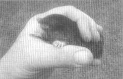 Photograph of Mole